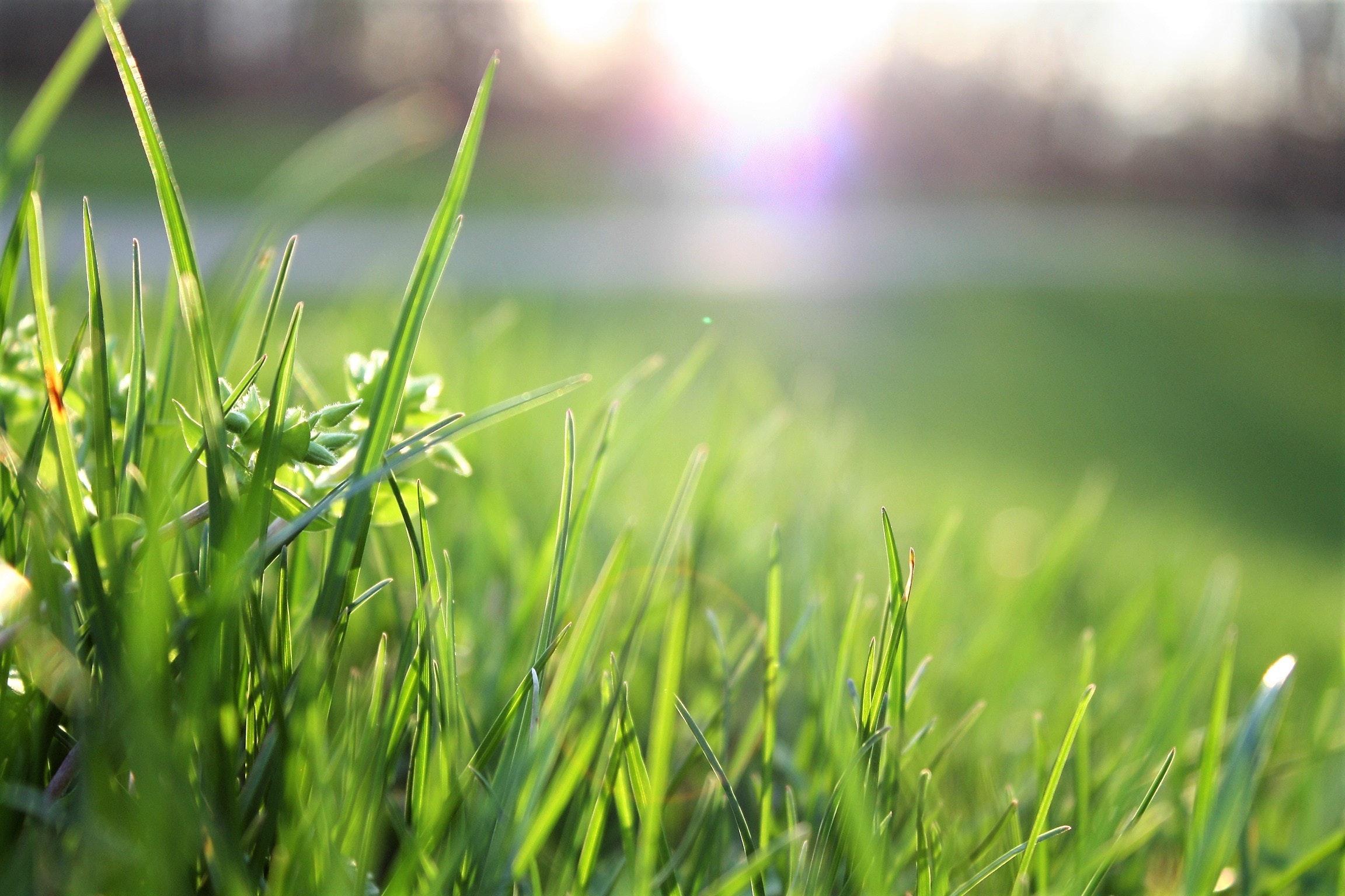 blade-of-grass-depth-of-field-environment-580900
